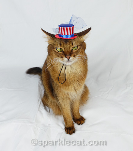 somali cat in tiny fourth of july hat looking cagey