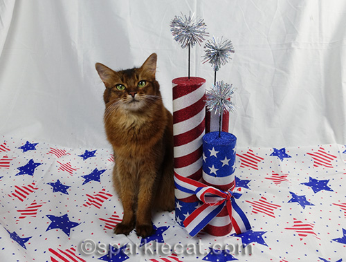 somali cat posing for fourth of July