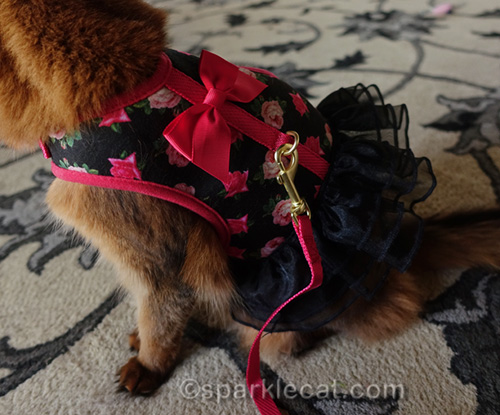 harness dress with d-ring in wrong place for a cat