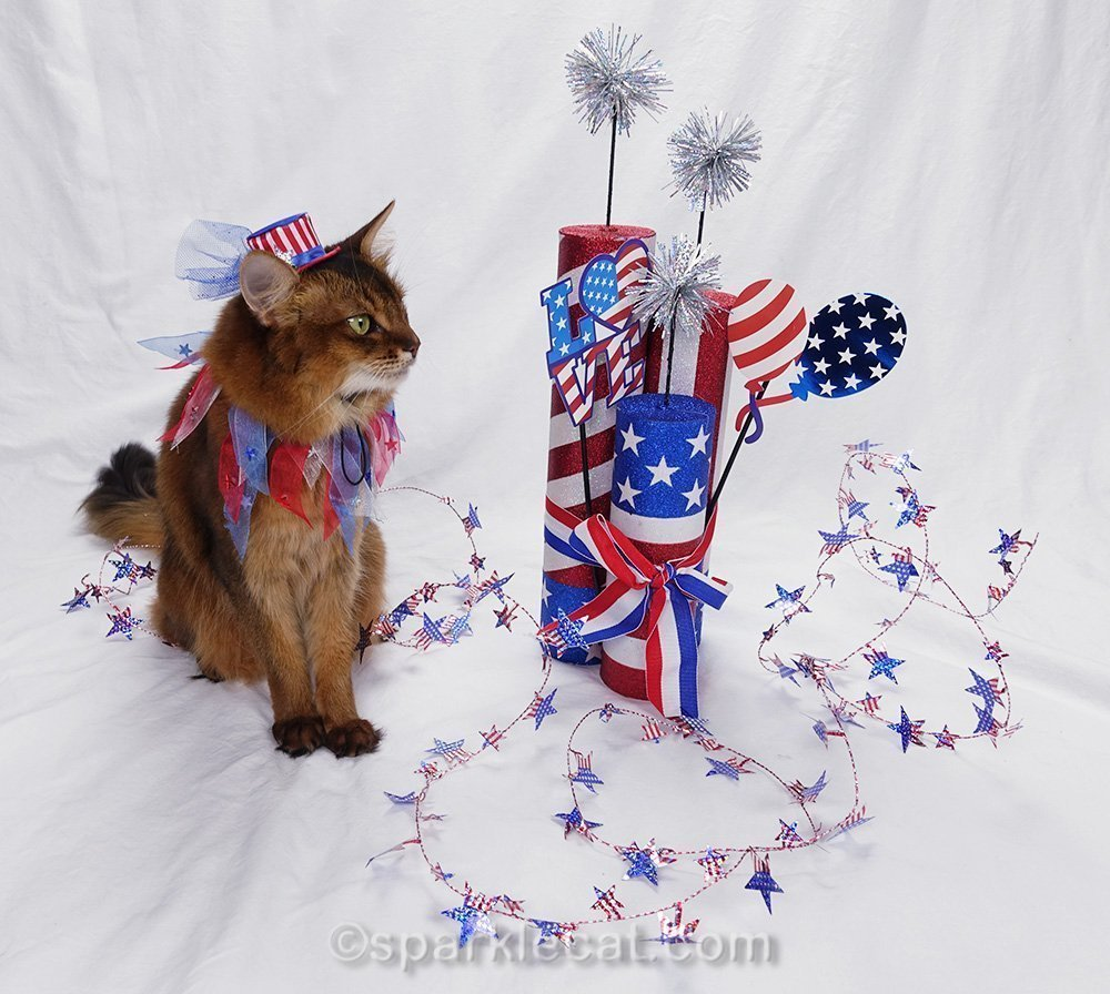 somali cat looking at Independence Day props