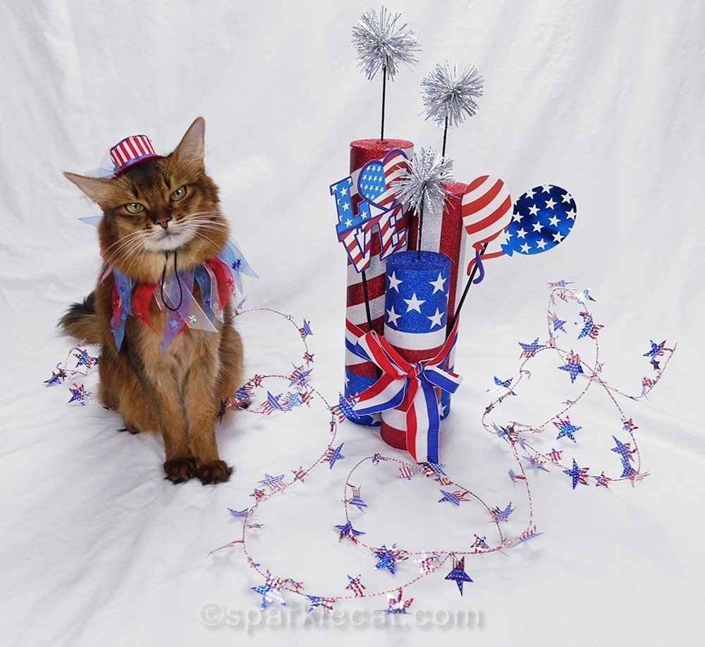 somali cat wearing tiny uncle sam hat for 4th of july photo shoot