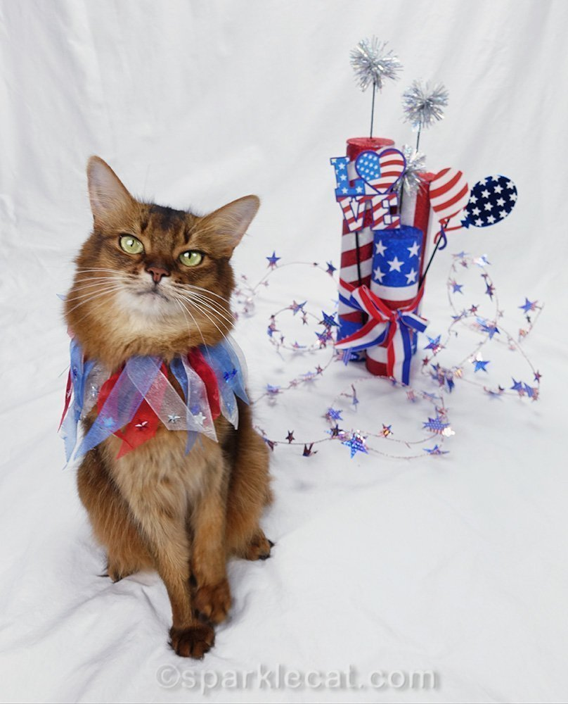 somali cat sitting in foreground, away from fourth of july props