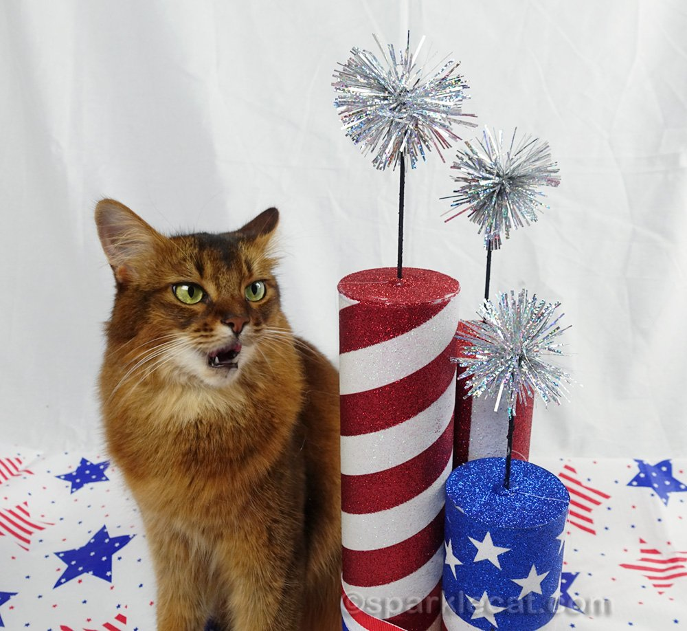 somali cat in independence day setting with mouth open