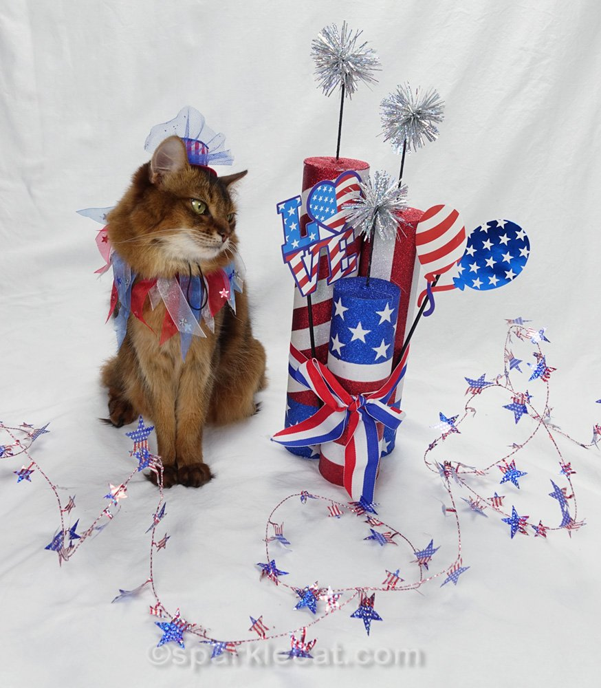 somali cat looking critically at Fourth of July photo props