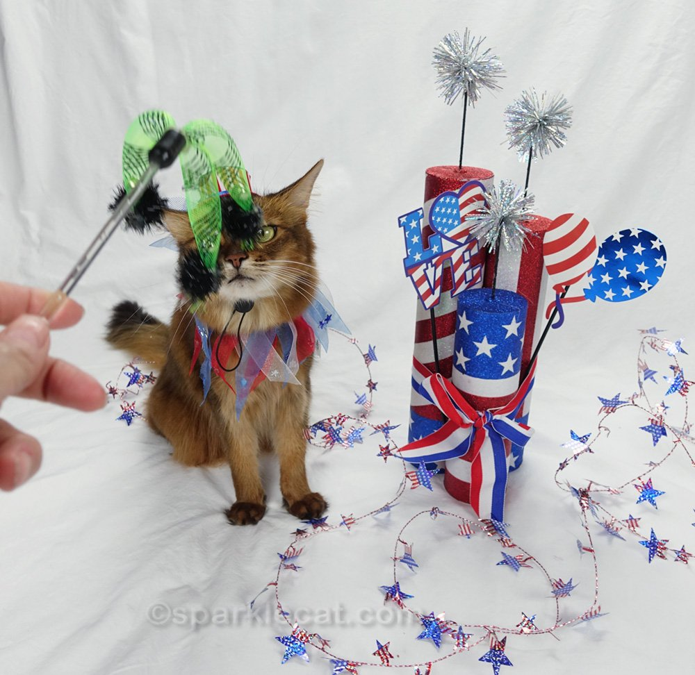 somali cat not happy about being photo bombed by cat toy
