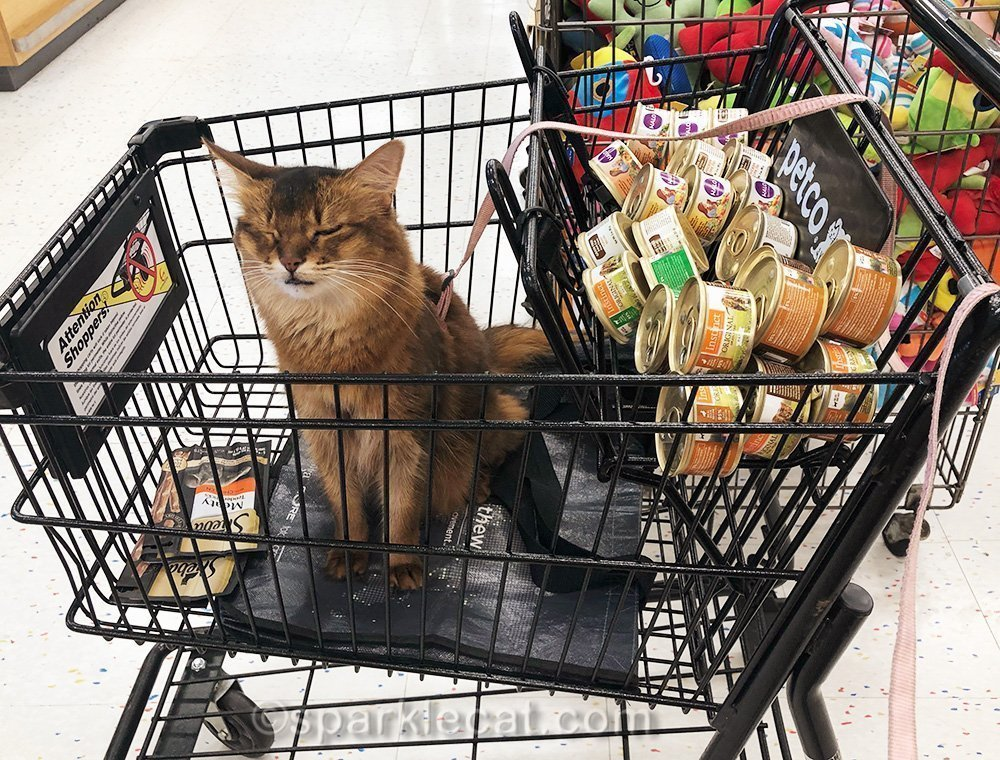 somali cat in pet store with eyes shut