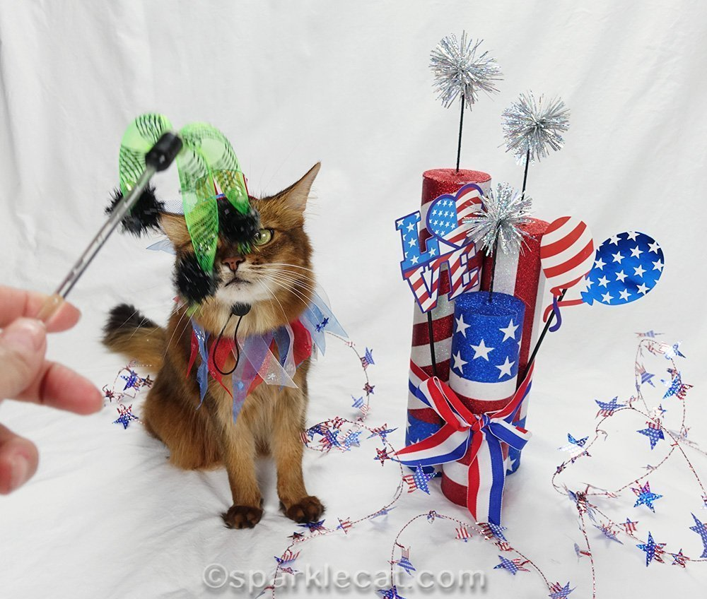 somali cat photo with human's hand and cat toy blocking her