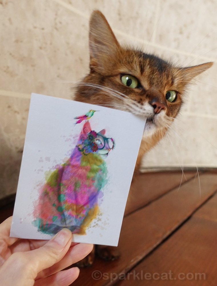 Somali cat with cat thank you card
