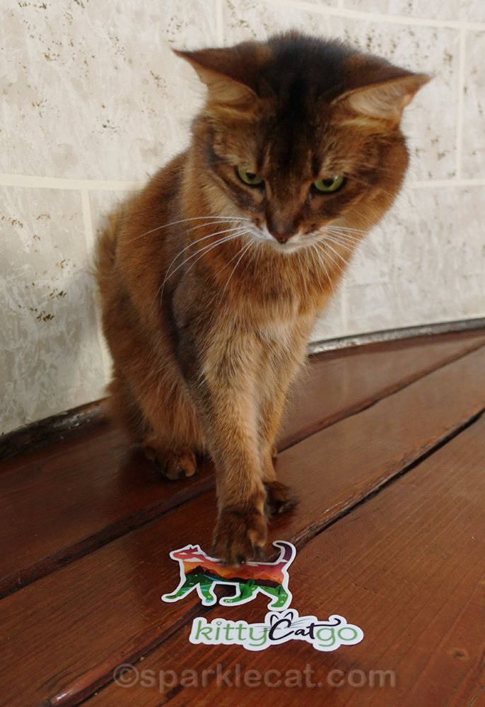 somali cat with Kitty Cat Go stickers