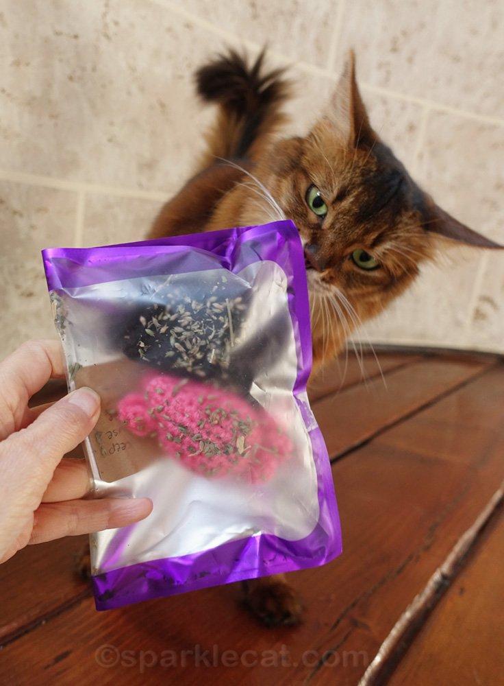 Somali cat whiffing catnip toys