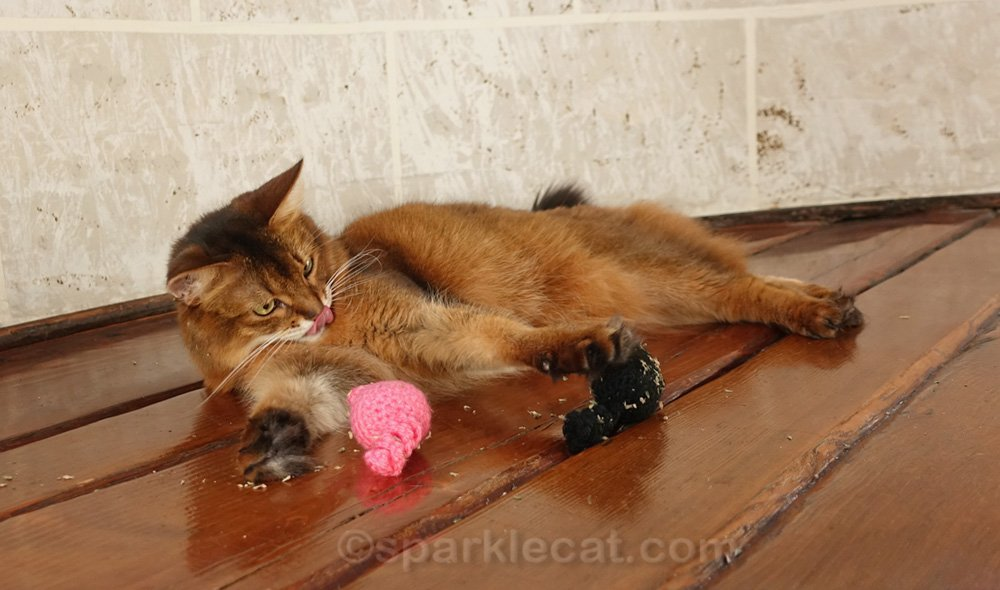 Somali cat with potent handmade catnip toys