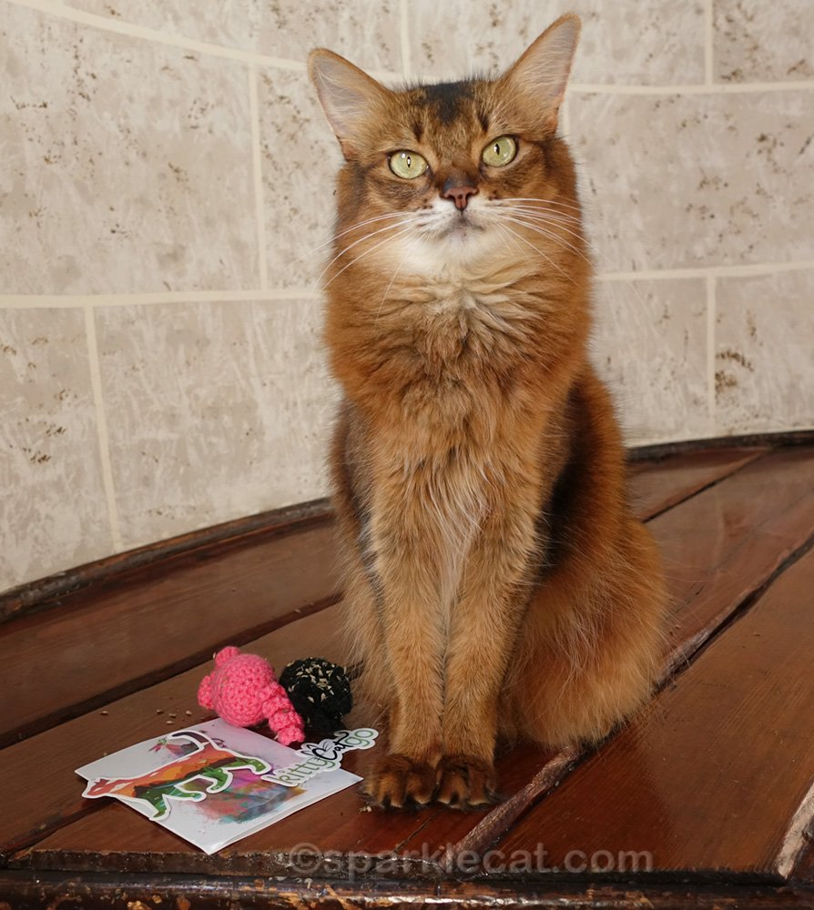 somali cat with thank you gifts from Kitty Cat Go