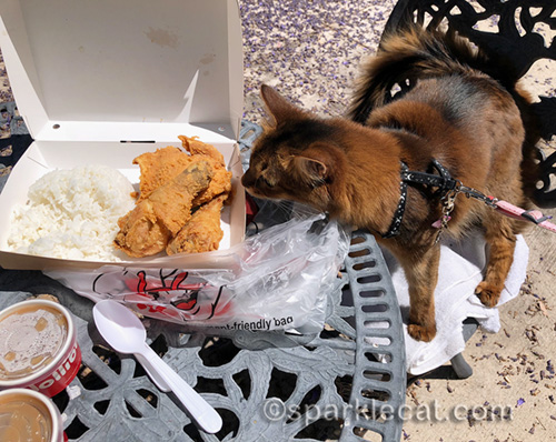 somali cat sniffing chickenjoy on national fried chicken day