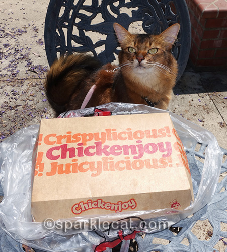 somali cat with chickenjoy box from Jollibee