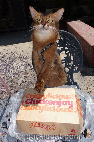 somali cat excited to open the chickenjoy box