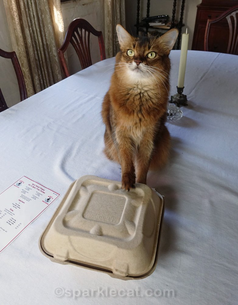 Summer celebrates National Fried Chicken Day with some tastes of her human's fried chicken and a short video.