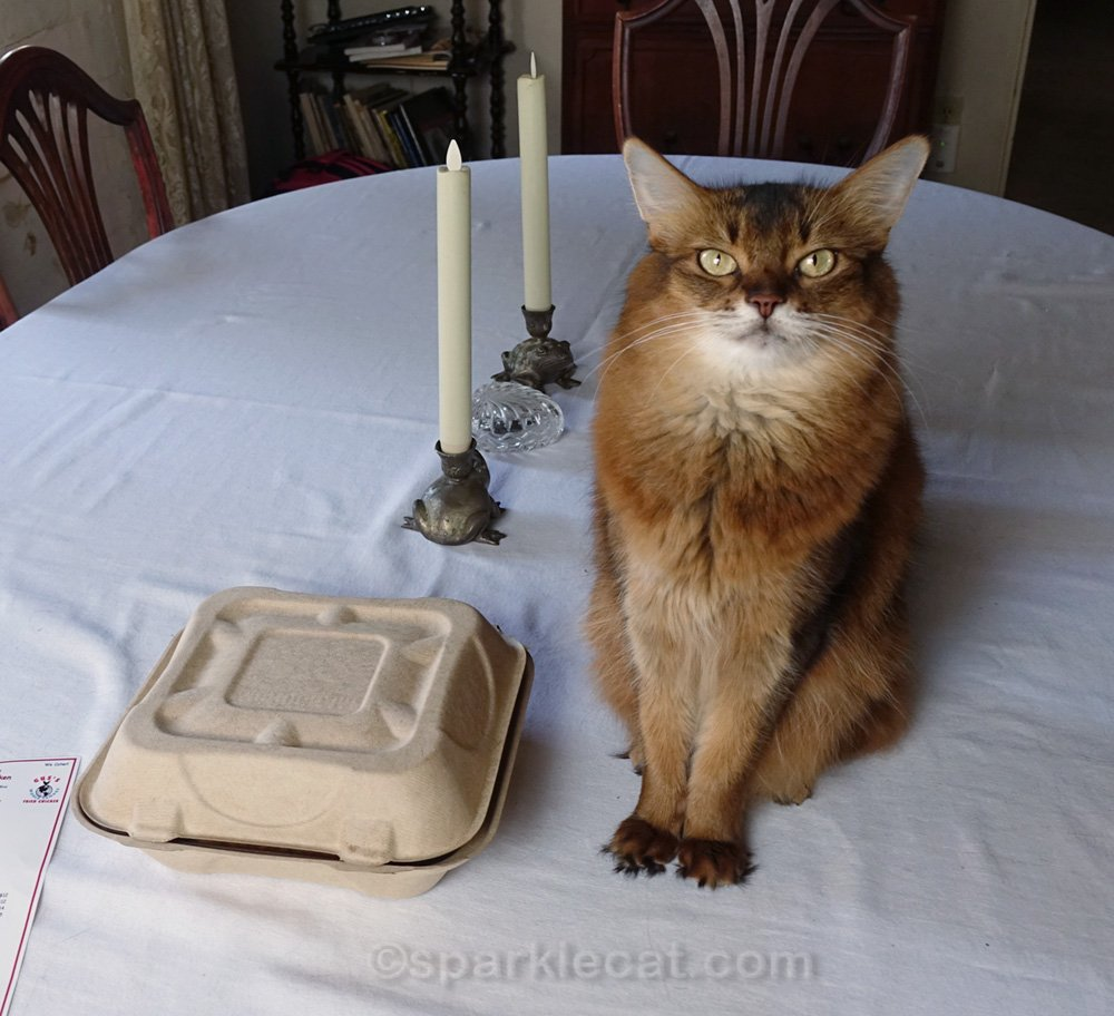 somali cat on her favorite holiday, national fried chicken day