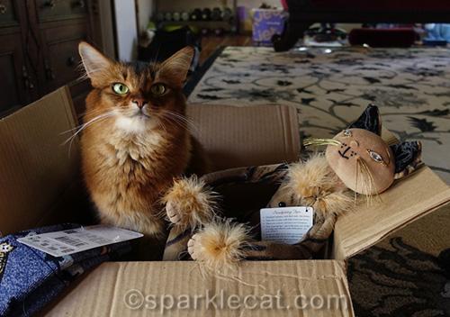 somali cat with Esperanza Glam Cat
