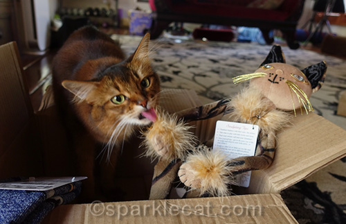 somali cat grooming Glamkat Esperanza