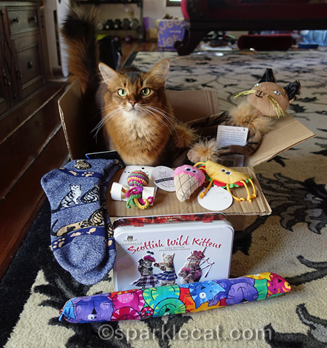 somali cat announces prize winner of the Cat World Domination Day giveaway