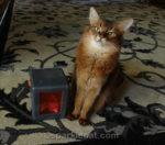 Cat Toy Marinater FAIL