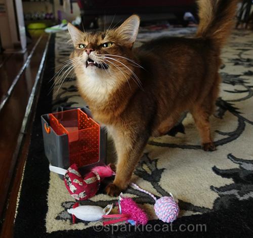 sneezy somali cat