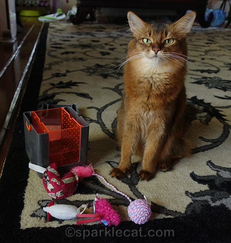 somali cat with stale catnip marinated toys