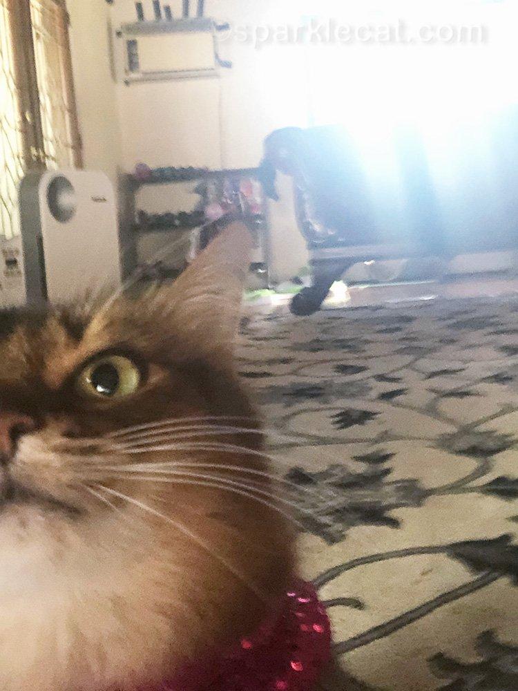 somali cat selfie outtake