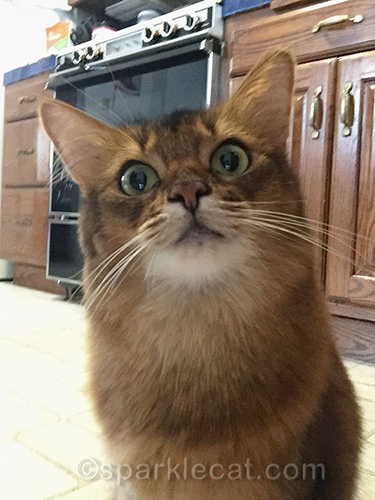 hungry somali cat takes selfie