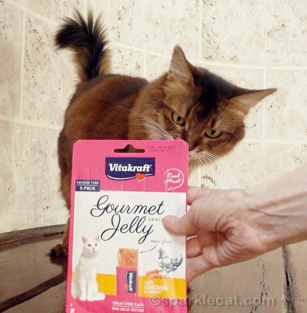 Somali cat with Vikakraft Gourmet Jelly cat tube treats