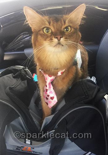 Not your regular cat