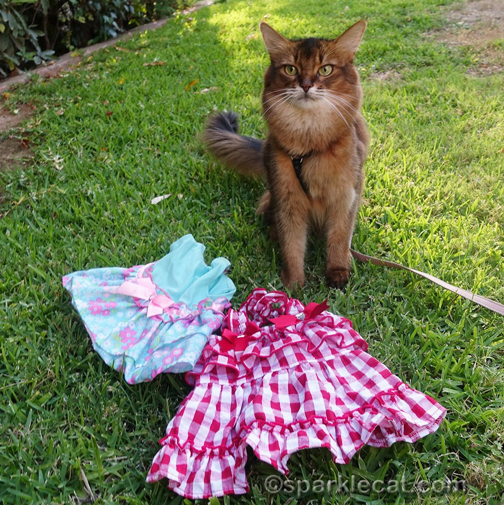 Summer shares some feline fashions - cat dresses from past summers.