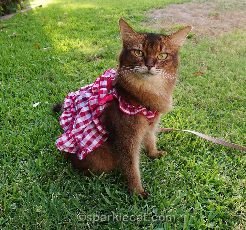 somali cat modeling gingham cat dress
