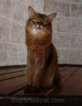 9 Misconceptions Cats Have About Humans