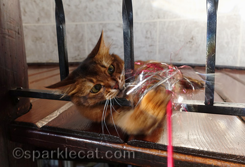 somali cat playing with sparkly wand toy