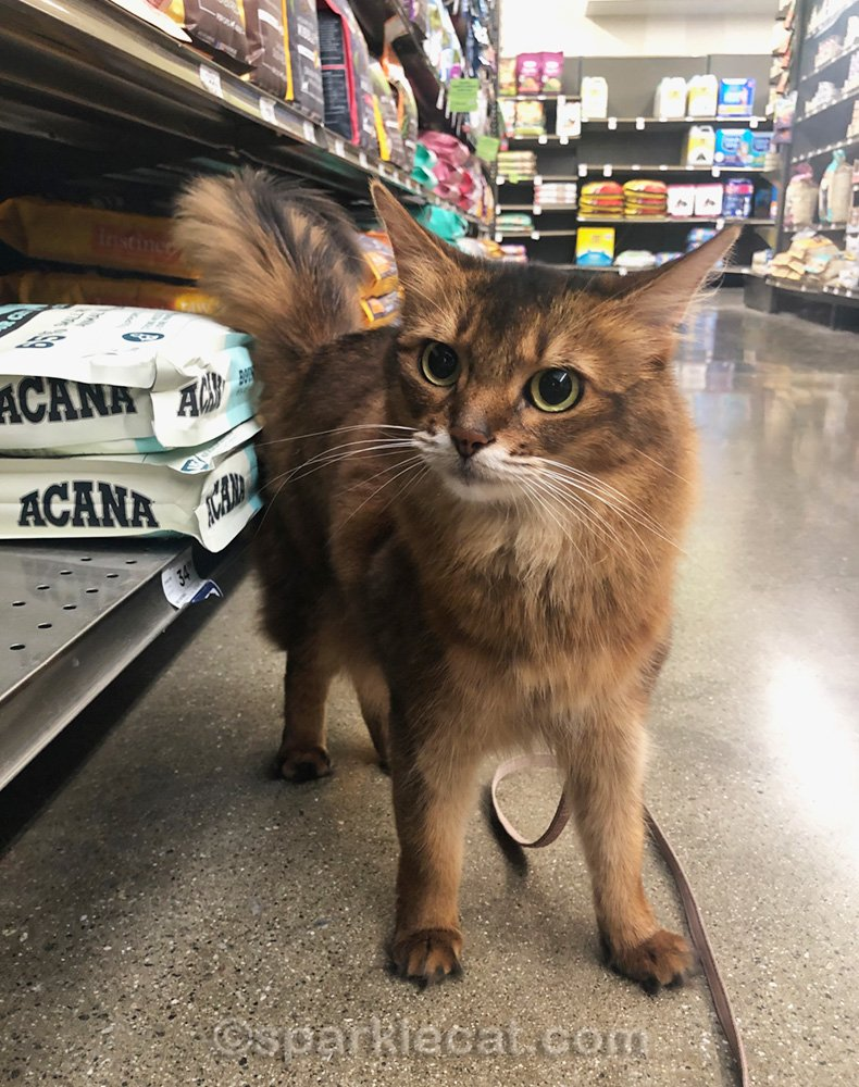 Summer goes cat food shopping with her human to keep the outside kitties fed, and has fun at the pet store.