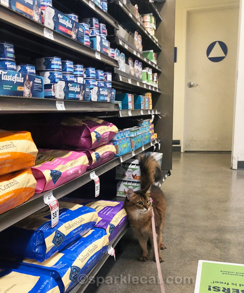 somali cat in cat food aisle of pet shop