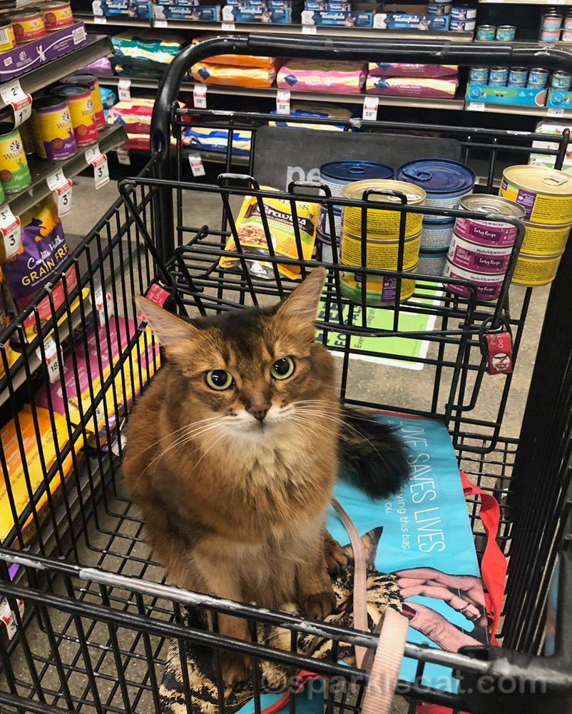 Somali cat in shopping cart with cat food