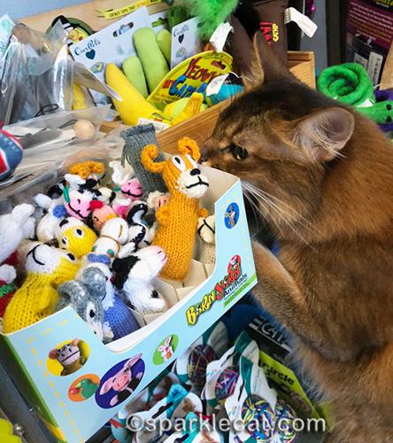 somali cat sniffing catnip toys