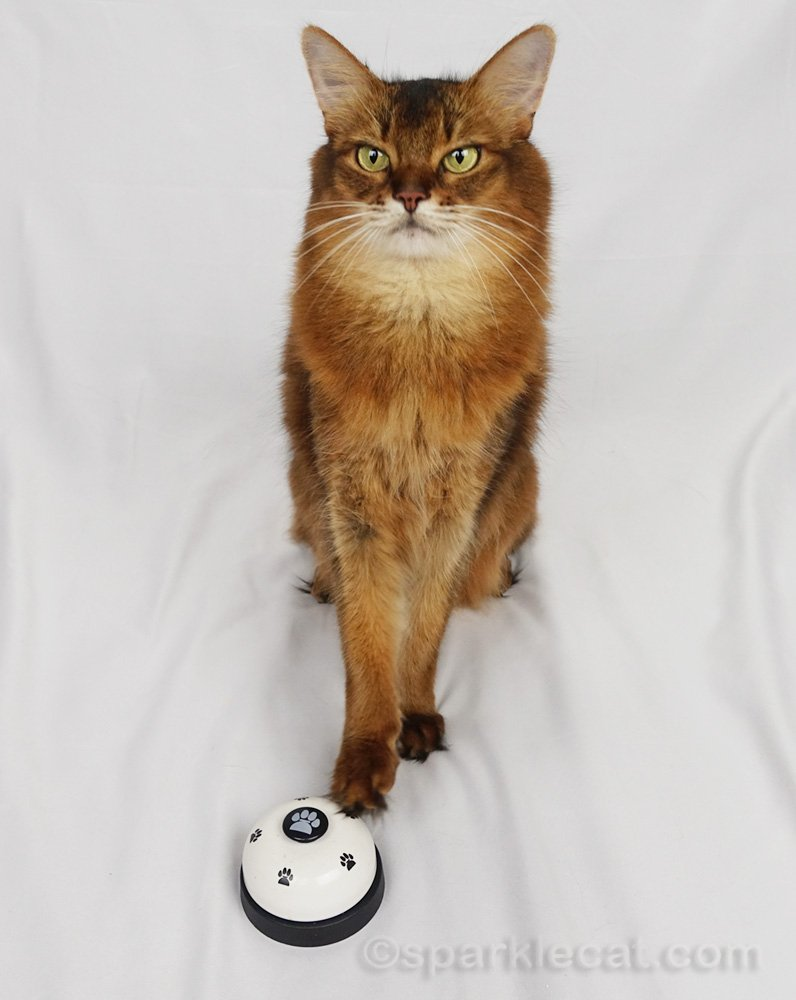 Summer shares a shortened version of her cat training video in which she is touching things on command.