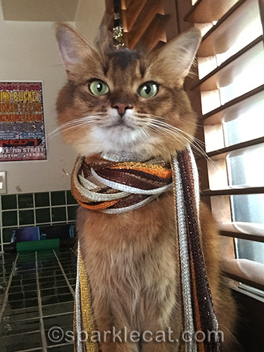 somali cat wearing stylish scarf
