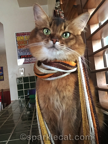 somali cat wearing scarf and tilting head