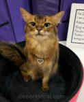 Kittens' First Cat Show