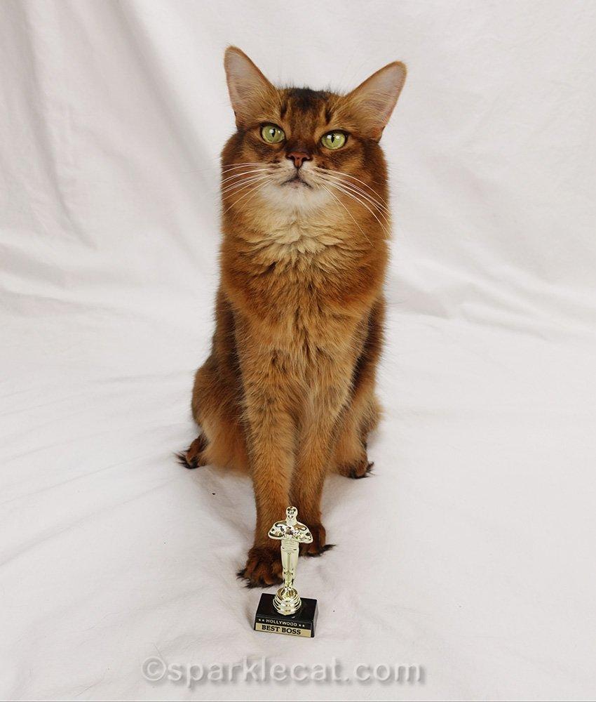 somali cat posing with tiny Oscar from Hollywood
