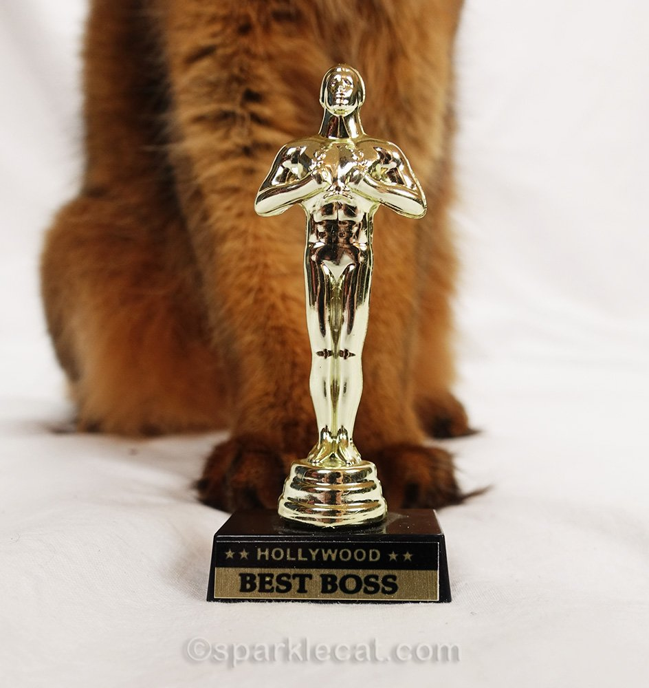 "somali cat posing with ""Best Boss"" Oscar"