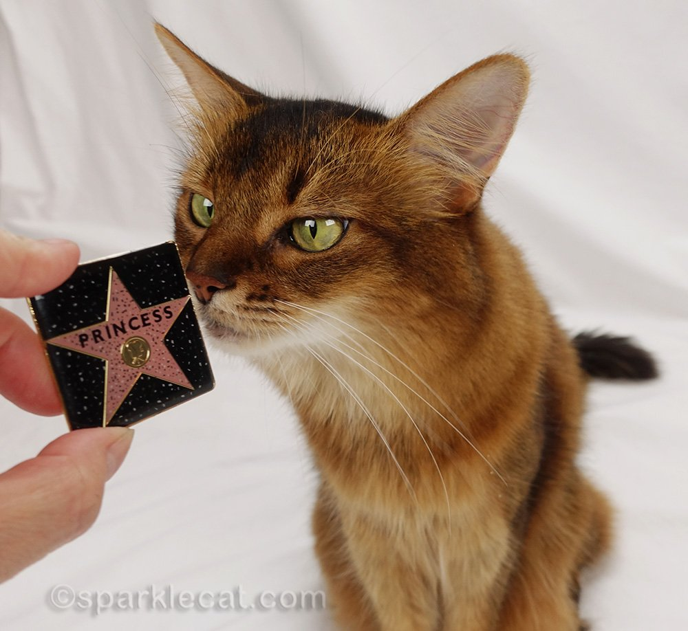 somali cat with Princess hollywood walk of fame refrigerator magnet