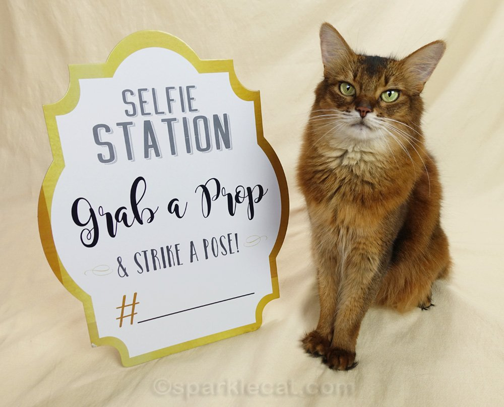 Summer gets a new selfie station sign for when she does cat shows and personal appearances.