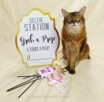 Somali cat with selfie station sign and some selfie props