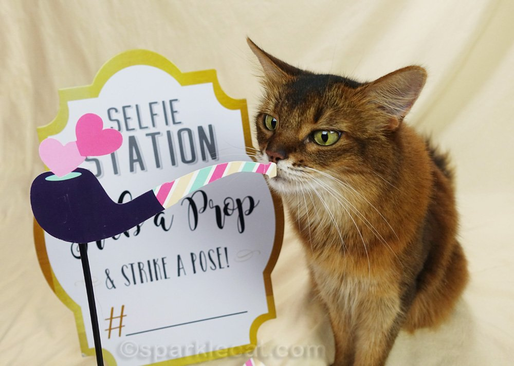 Somali cat with pipe selfie prop