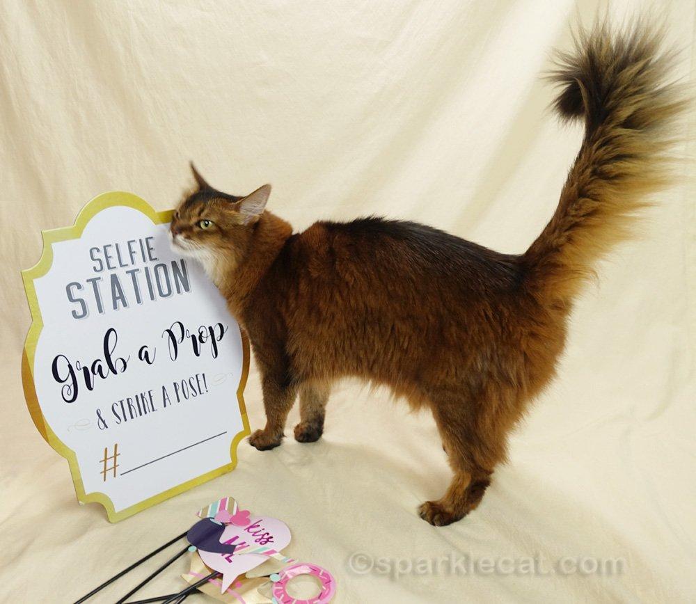 Somali cat rubbing on Selfie Station sign